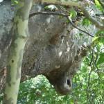 Главата на бика