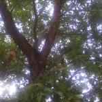 IMG_20140911_154435