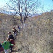 Доброволческа акция в помощ на лешоядите край с. Долно Озирово - през храстите към мястото за работа